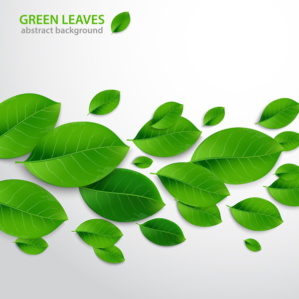 How to Create Realistic Vector Leaves in Illustrator