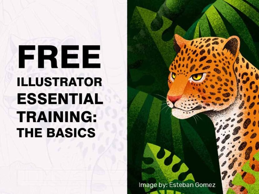 Free Illustrator Essential Training The Basics
